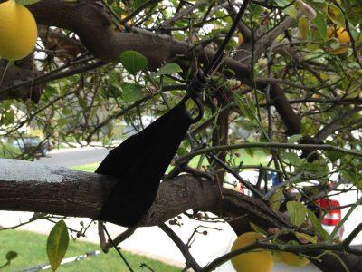 Fruit Tree Care 1