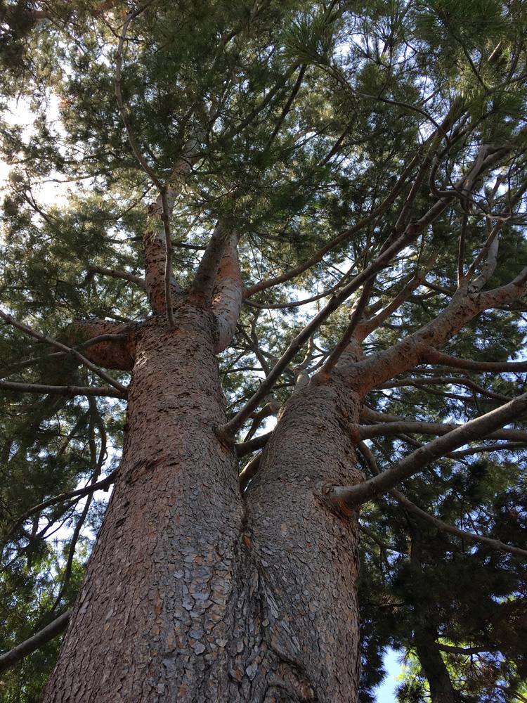 treecarela tree services