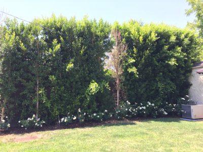 Tree Planting Plan 1