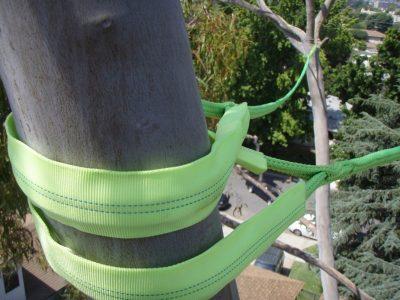 Cabling & Bracing 4