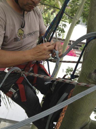 Cabling & Bracing 6