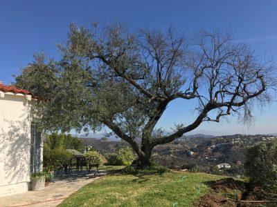 Tree in a Backyard