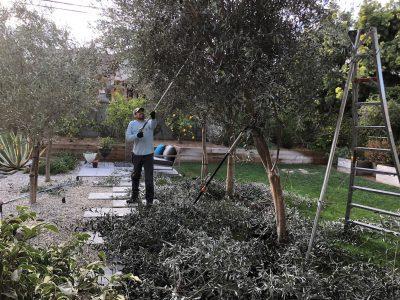 Pruning 4