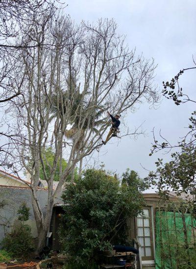 Pruning 5