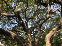 la tree care