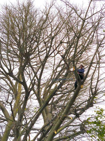 Pruning 6
