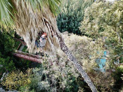 Palm Pruning 3