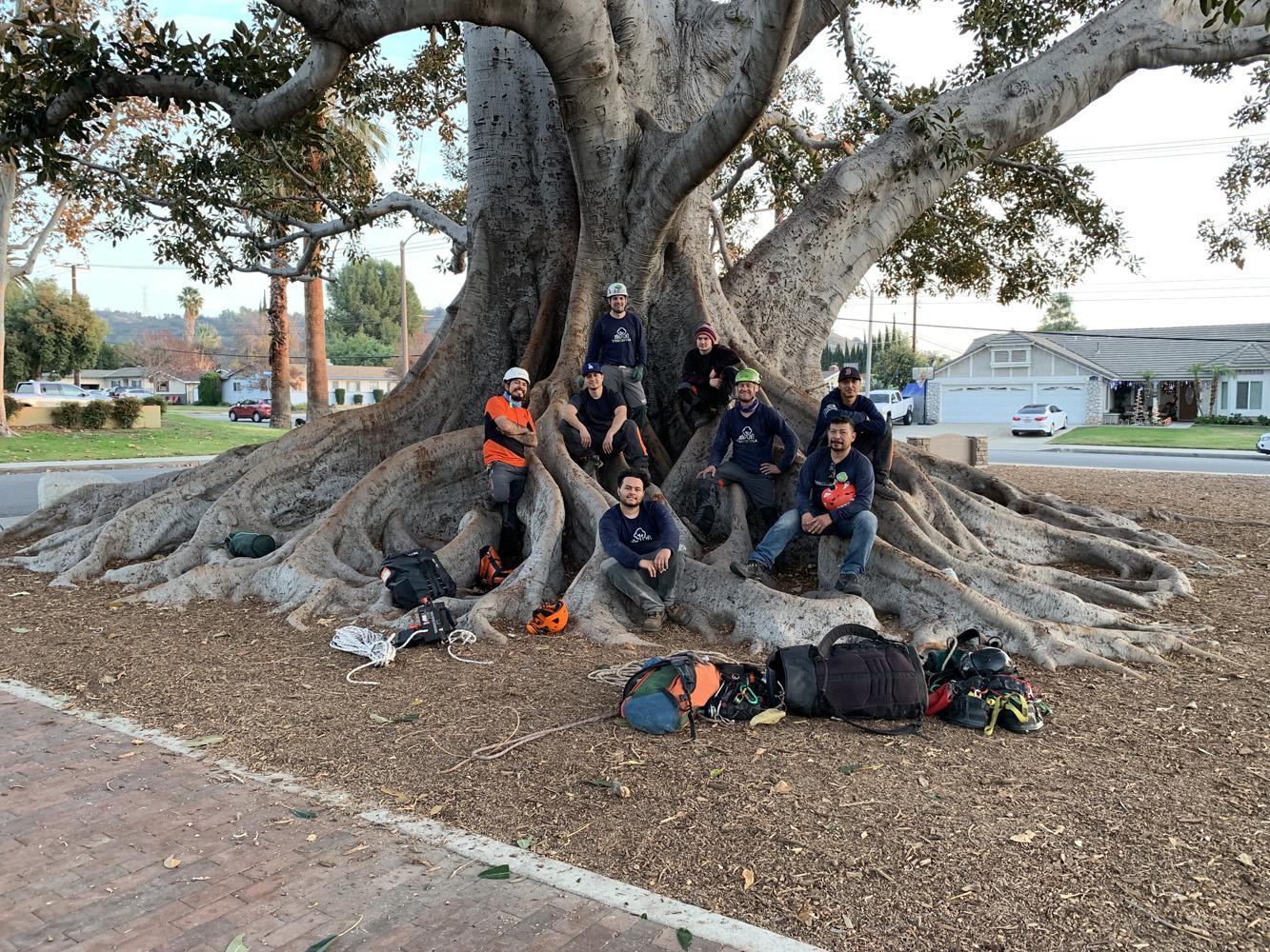 Arborists sitting on a tree