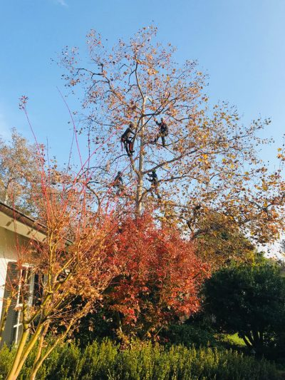 Pruning 13