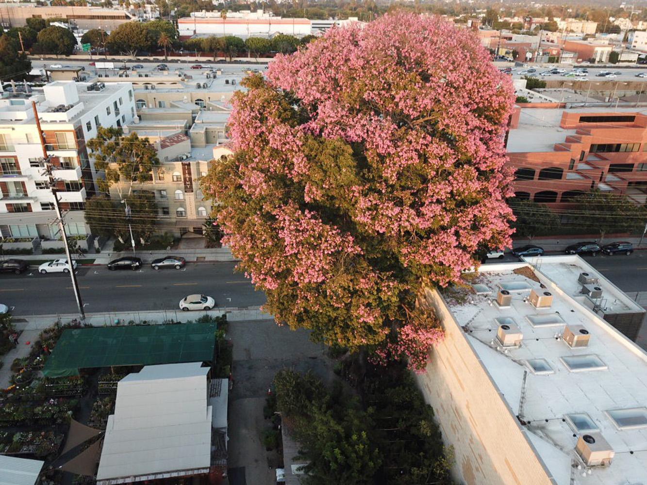 A Gigantic Tree