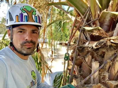 Palm Pruning 5