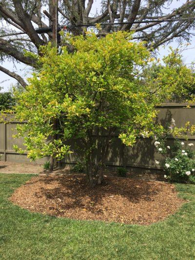 Fruit Tree Care 3