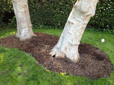 Mulching & Fertilizing 2