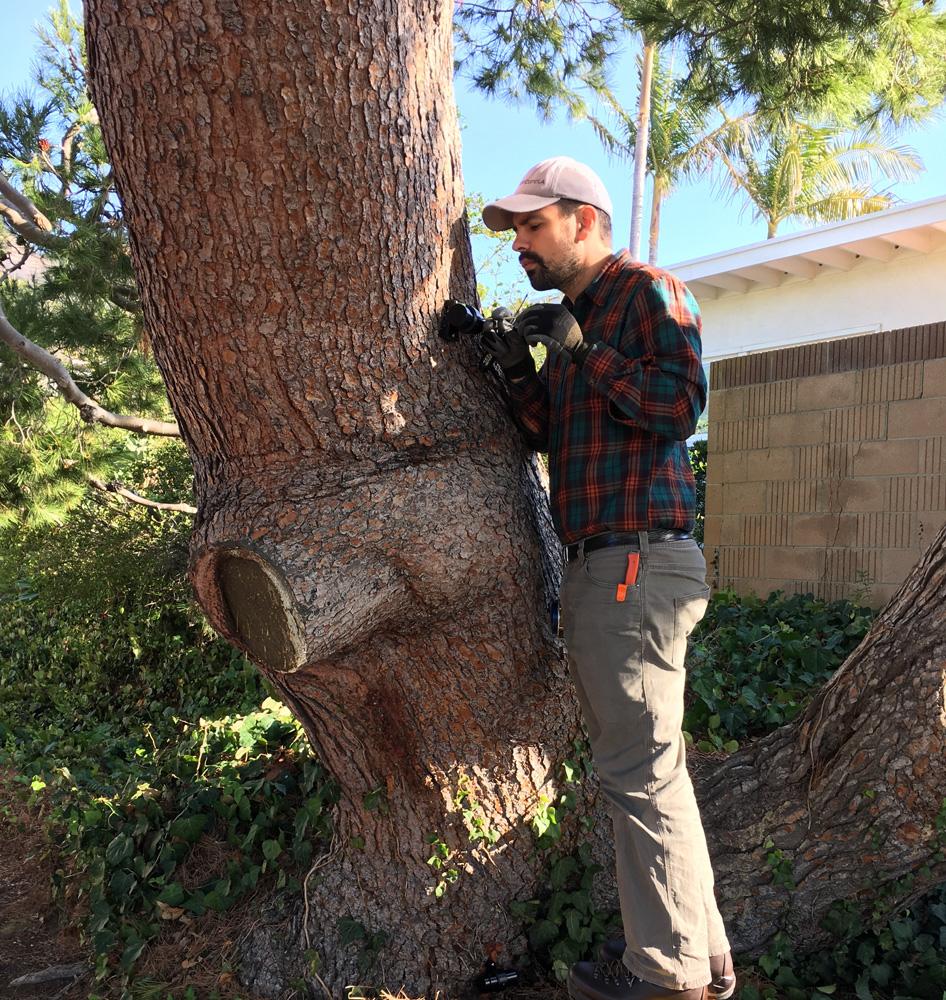 Nick tree inspect