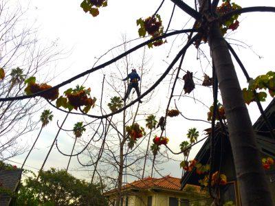 Pruning 14