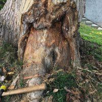 Tree Repair