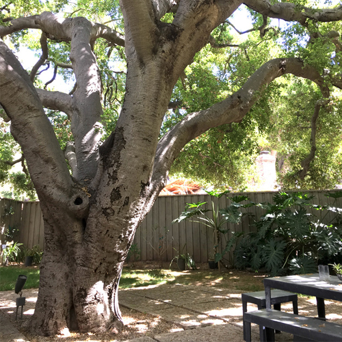 Tree in a Backyard