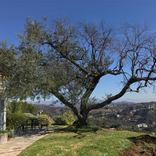 Tree Preservation 3