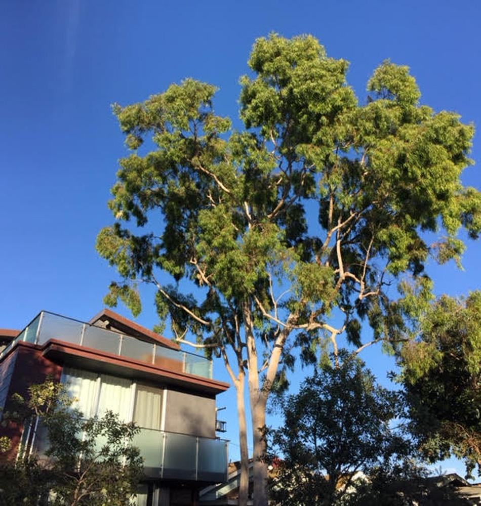 A Really Tall Tree